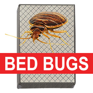Recycle Bed Bug Infested Box Spring